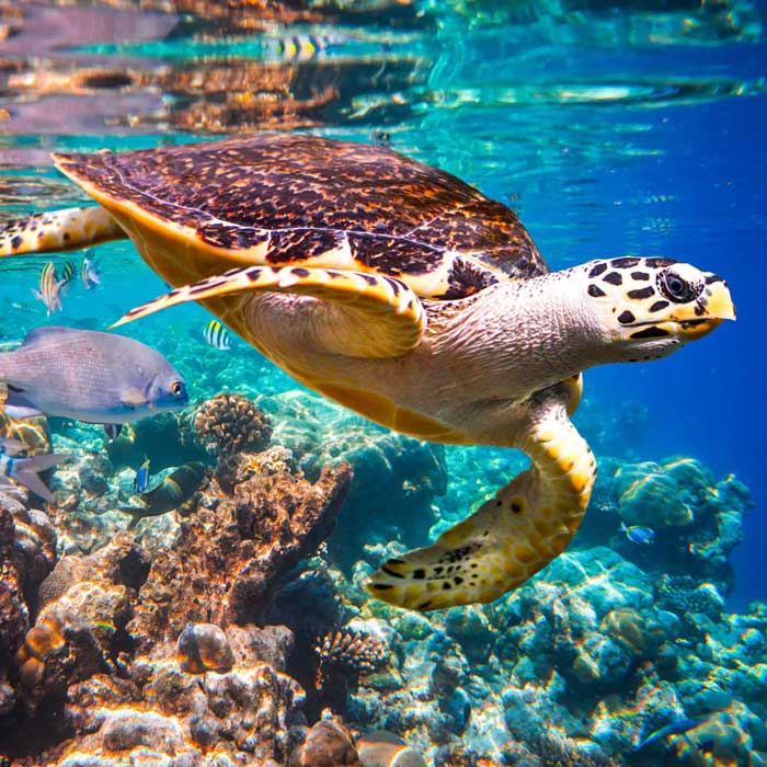 Swim with Turtles and Hold a Crocodile, with a 3 day 2 night Package
